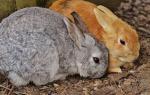 rabbit-1312581_640