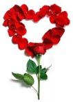 rose-1215314_640